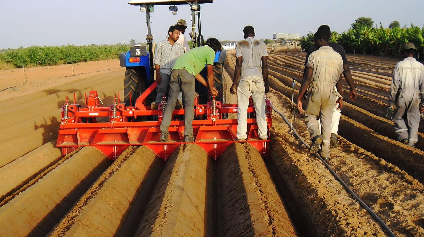 potato growers irrigation