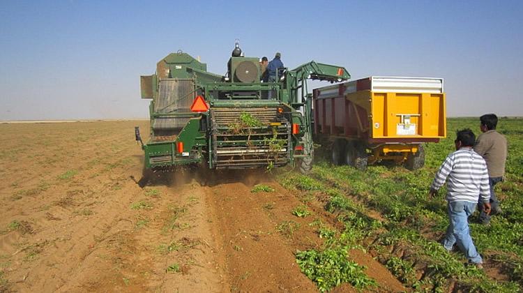 Mat riels de r colte et stockage de la pomme de terre afrique moyen orien - Pomme de terre recolte ...