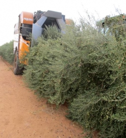 Trailed Olive harvester from Pellenc