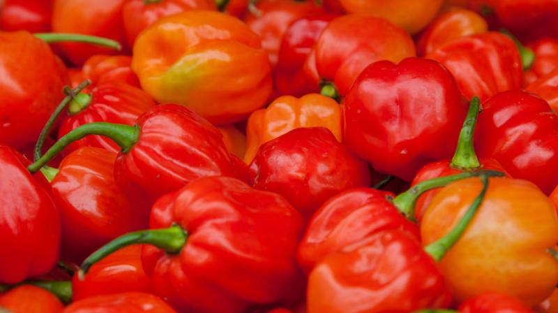 Semences de piment & poivron : des variétés adaptées à l
