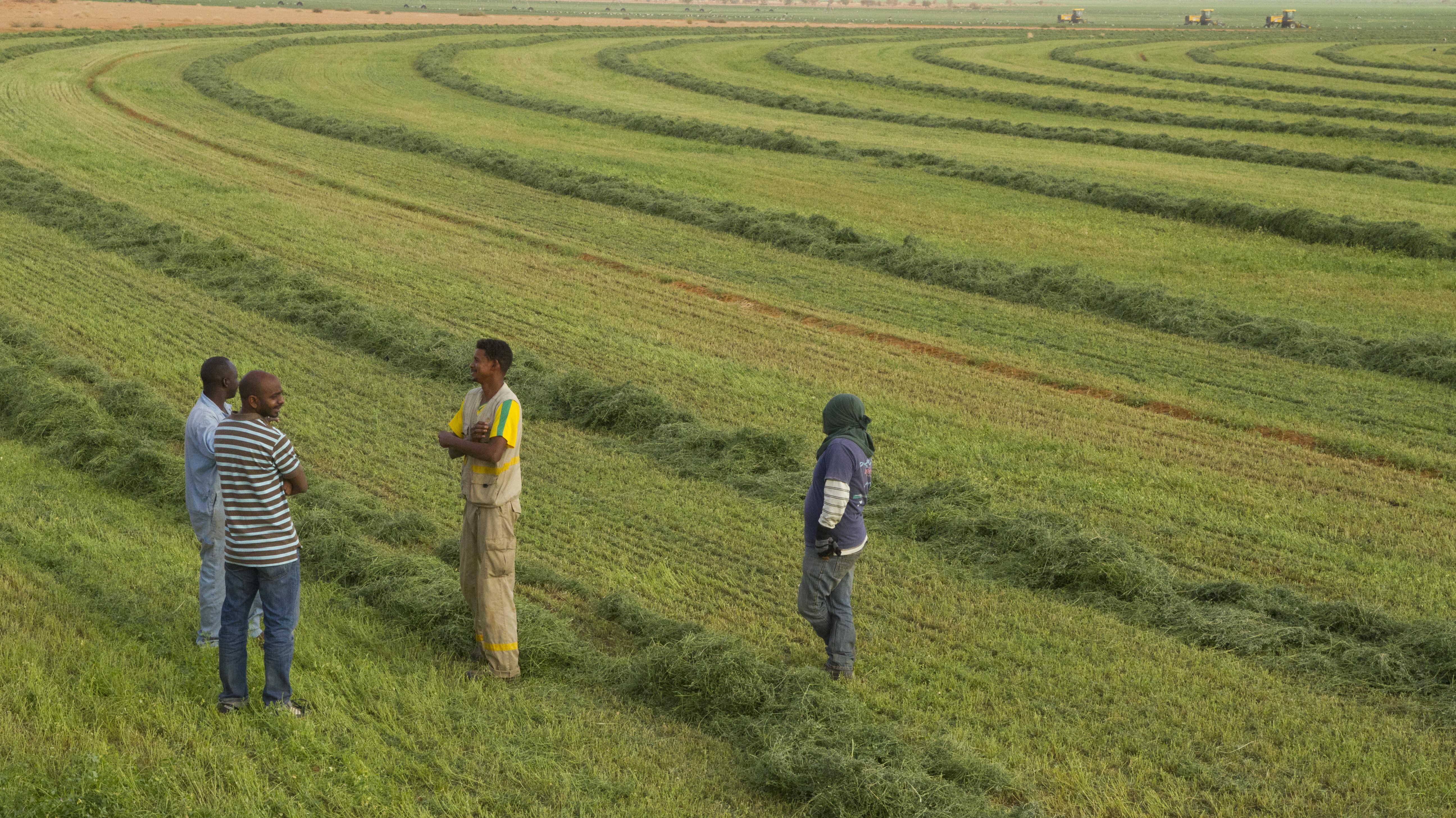 Ics Leading Partner For Farming Investors In Sudan