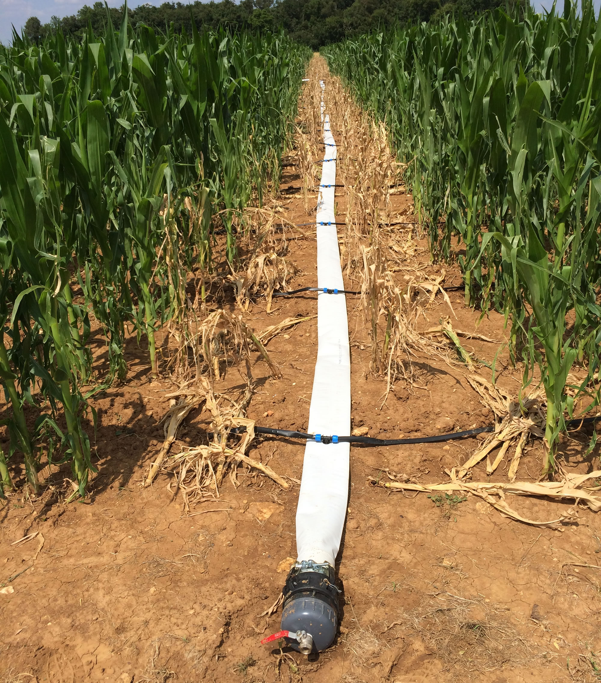Drip Irrigation For Field Crops Too
