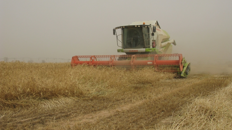 Harvesting Cereals in arid, semi-arid and tropical
